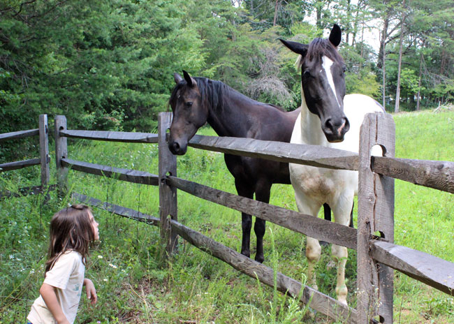 Two horses say hello to a hiker.