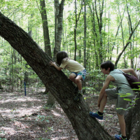 Climbing the sourwood.